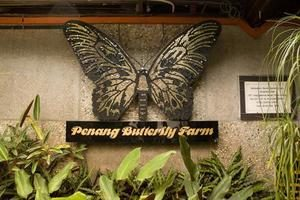 Penang Butterfly Farm