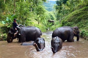 WisataMekong Elephant Park