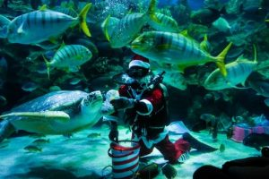 feeding aquarium klcc