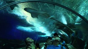 underwater world singapura