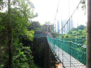 wisata hutan di canopy walk menara kuala lumpur