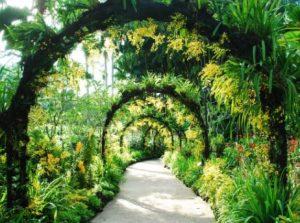 Singapore Botanical Garden