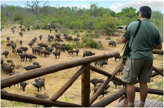 Taman Nasional Kruger , Wisata Taman Nasional Terbaik Di Afrika Selatan