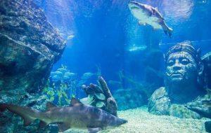 hiu tengah berenang di salah satu akuarium