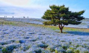 Hitachi-siaside-park