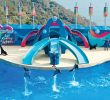 Ocean Park Hong Kong , Wisata Air Terbaik Untuk Anak Dan Keluarga