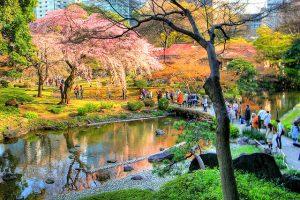 Koishikawa-Botanical-Garden
