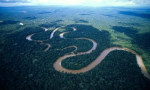 hutan-amazon