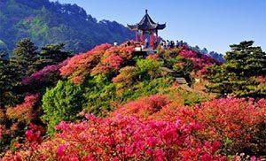 Botanical Viewing Garden