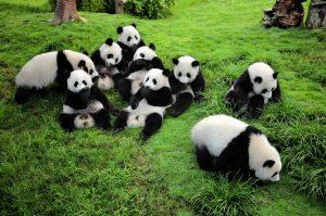 Membuat List Destinasi Wisata di Chengdu
