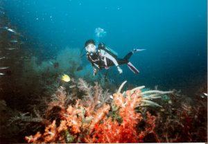 Menyelam di Pulau Sipadan