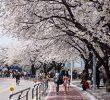 8 Tempat Romantis Di Seoul Paling Cocok Untuk Bulan Madu