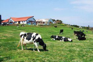 mother-farm