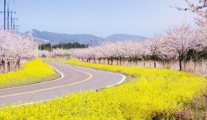 Pulau-Jeju