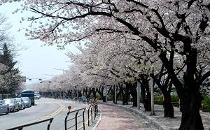 18 Tempat Wisata Di Korea Selatan Saat Musim Semi Paling terkenal