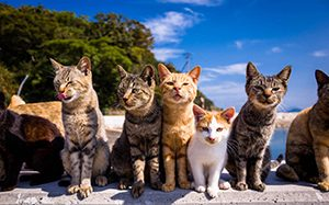Aoshima- Cat Island