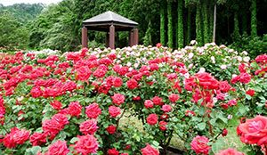 Higashizawa Rose Park, Prefektur Yamagata