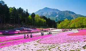 Hitsujiyama Park, Prefektur Saitama