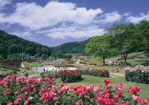 Ladang Bunga Mawar - Higashizawa Rose Park, Yamagata