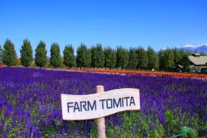 Taman Bunga Lavender - Farm Tomita, Hokkaido