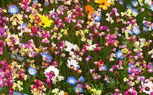 Tanbo wo Tsukatta Flower Garden, Prefektur Shizouka