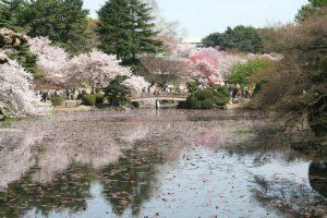 Taman-Nasional-Shinjuku-Gyoen
