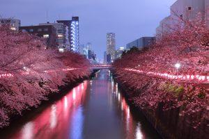 Taman-Sakura-di-Megurogawa