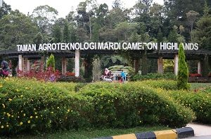 Agro-Technology-Park-Mardi-Cameron-Highlands