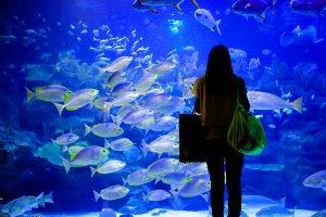 Aquaria KLCC Visit in Malaysia