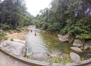 Burmese-Pool