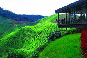 Cameron Highlands Tour in Malaysia