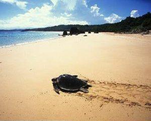 Taman Nasional Kepulauan Penyu