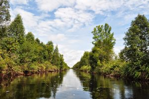 Taman Nasional Similajau