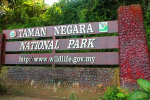 Taman Negara Day Trip