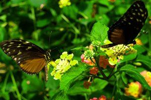 Cameron Highlands Butterfly Garden