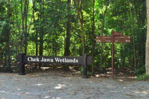 Chek Jawa