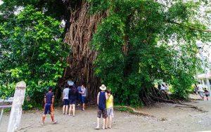 Millenium-Balete-Tree