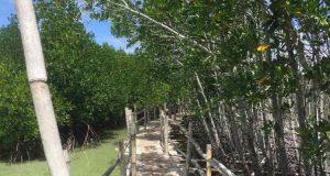 Obo ob Mangrove Eco Park