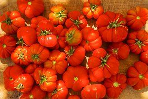 Santorini Tomato Seed