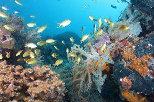 Scuba-Diving-in-Mactan