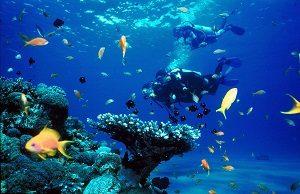 Tubbataha reef tempat wisata di pulau palawan