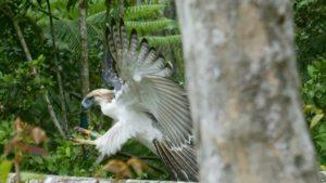 taman Bakau Talabong & Suaka Burung dumaguete