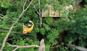tur Underground Gibbon