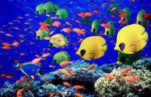 HP Reef dan Manta Point