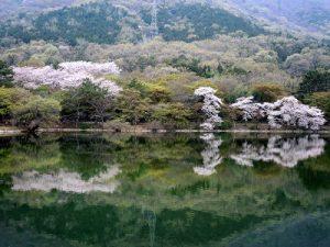 Jinhae-NFRDI-Environment-Eco-park