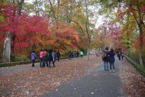 Korea-National-Arboretum