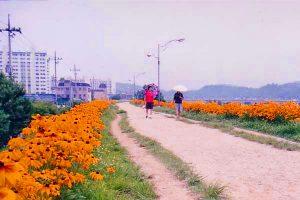 Kota Daegu