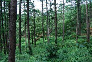 Namhae Pyeonbaek Recreational Forest