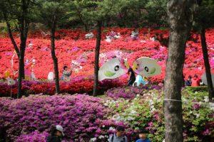bukit bunga