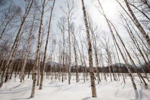wointerscapes winter sonata